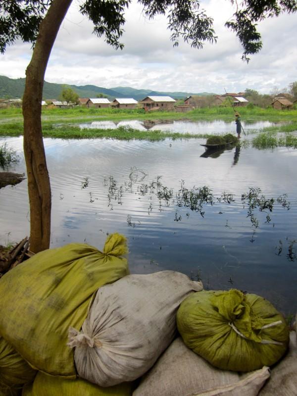 Burmese rice field, Inle Lake, Myanmar