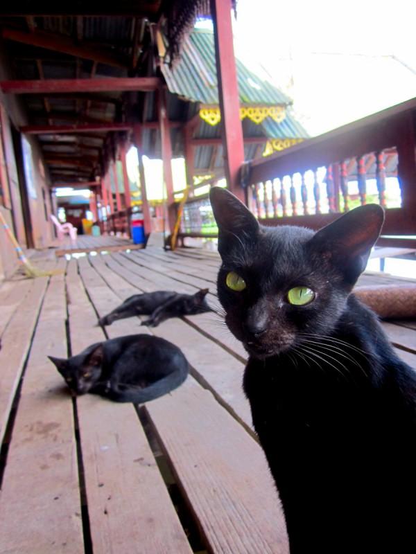 Jumping Cat Monastery, Inle Lake, Myanmar