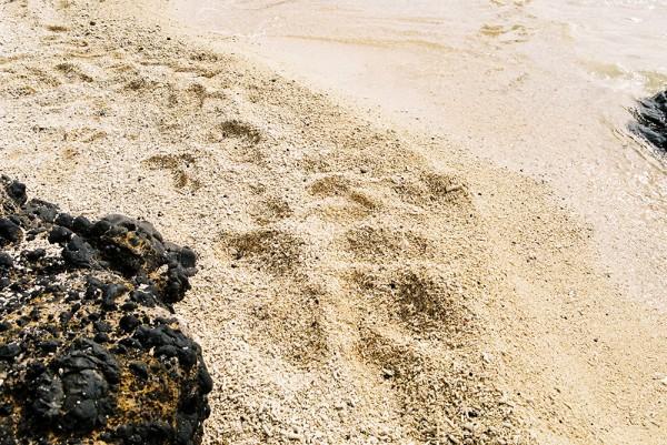Deserted Island Ynigo Santos Live Fast Mag