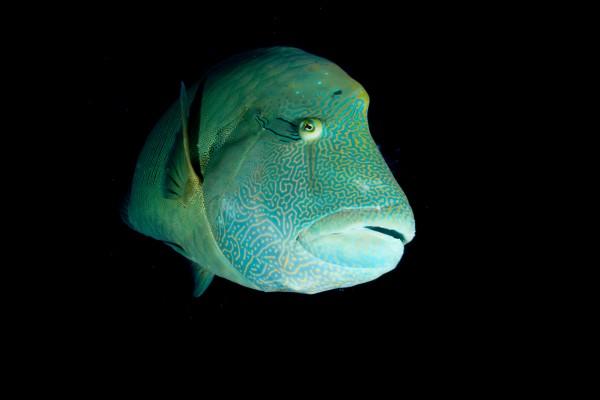 Wanderlust Palau Ocean Live Fast Mag