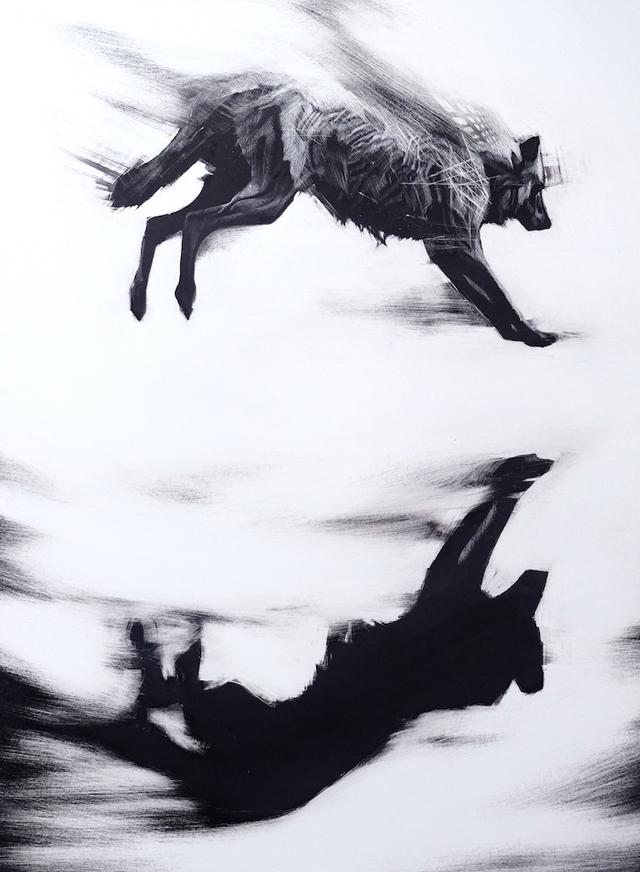 Leap (Arctic Wolf- Canis lupus arctos) -1