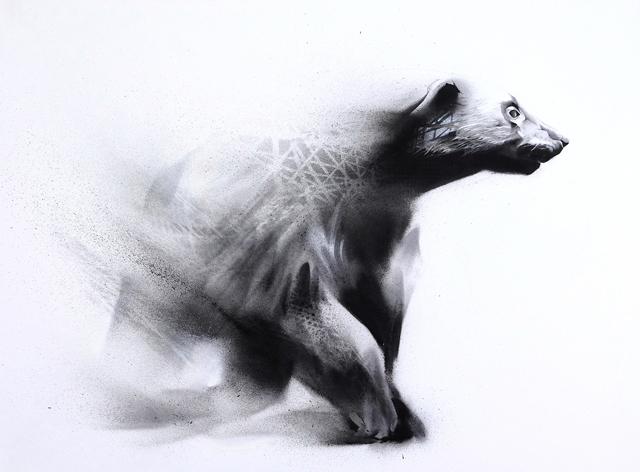 Roam (Wolverine-Gulo gulo)-1