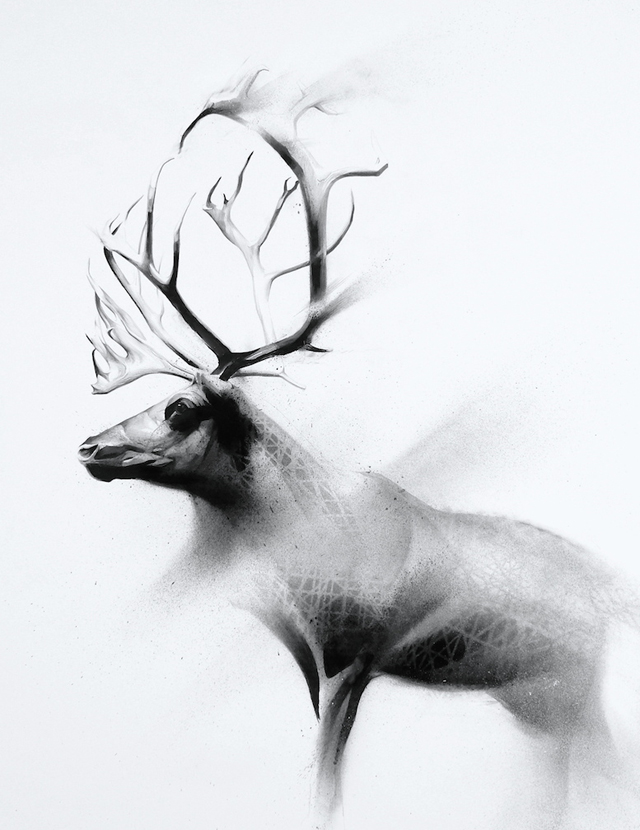 Shed (Caribou-Rangifer tarandus )-1