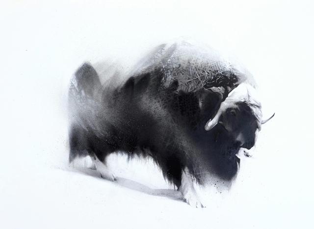 Weather (Musk Ox - Ovibos moschatus)-1