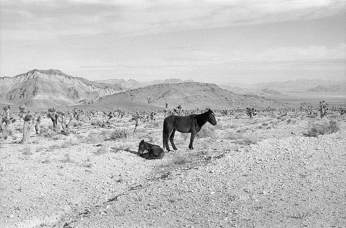 navada desert