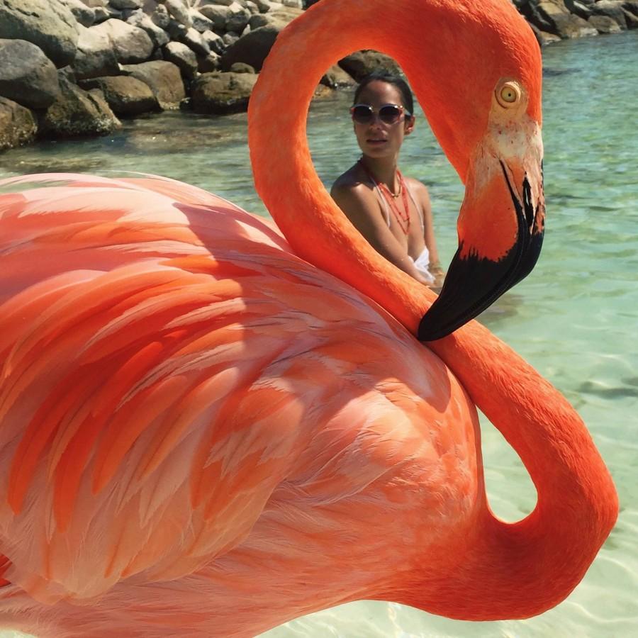 100GramsOfSun-FlamingoBeach-Aruba-2