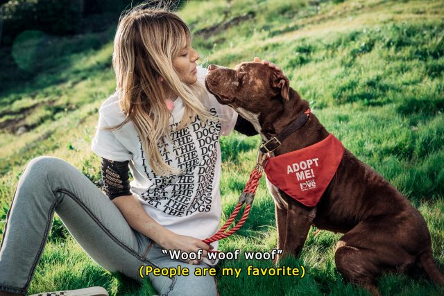 denim_and_dogs_subtitles_1