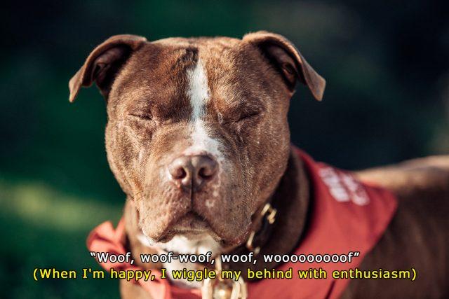 denim_and_dogs_subtitles_5