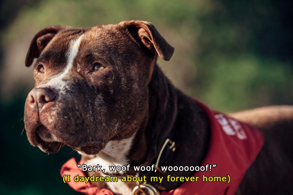 denim_and_dogs_subtitles_6